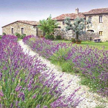Servilletas para decoupage Lavender Farm 33 X 33 cm.