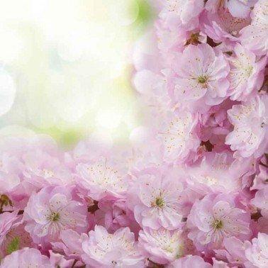 Servilletas para decoupage Blossoming Cherry Frame 33 X 33 cm.