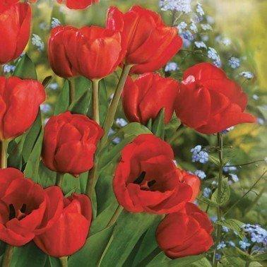 Servilletas para decoupage Bunch of Red Tulips 33 X 33 cm.
