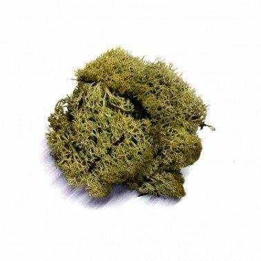 Musgo Natural 100 gr.