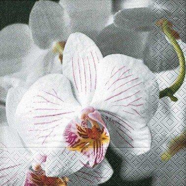 Servilletas para decoupage Beautiful orchid 33 X 33 cm.